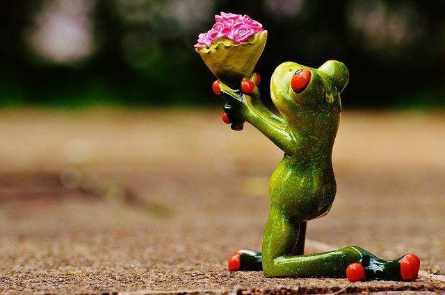 rana ofreciendo un ramo de flores